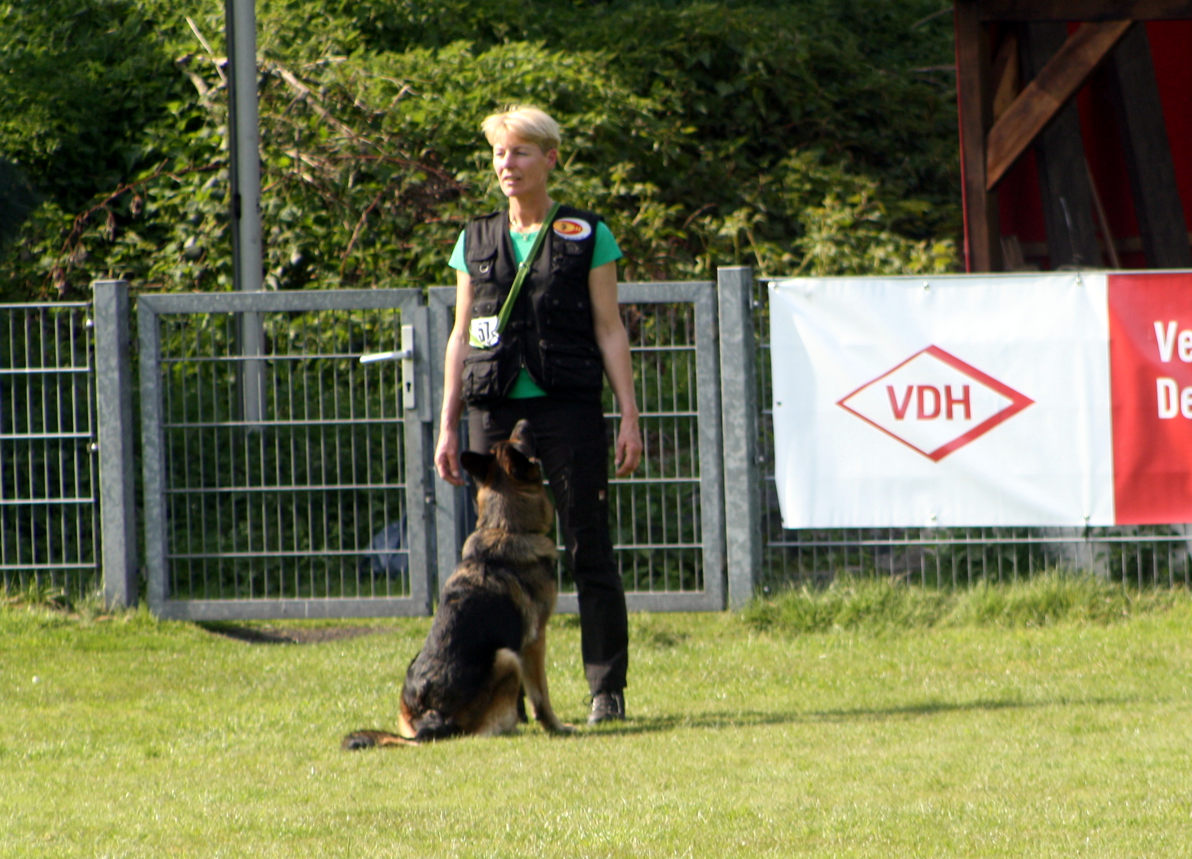obedience training herne